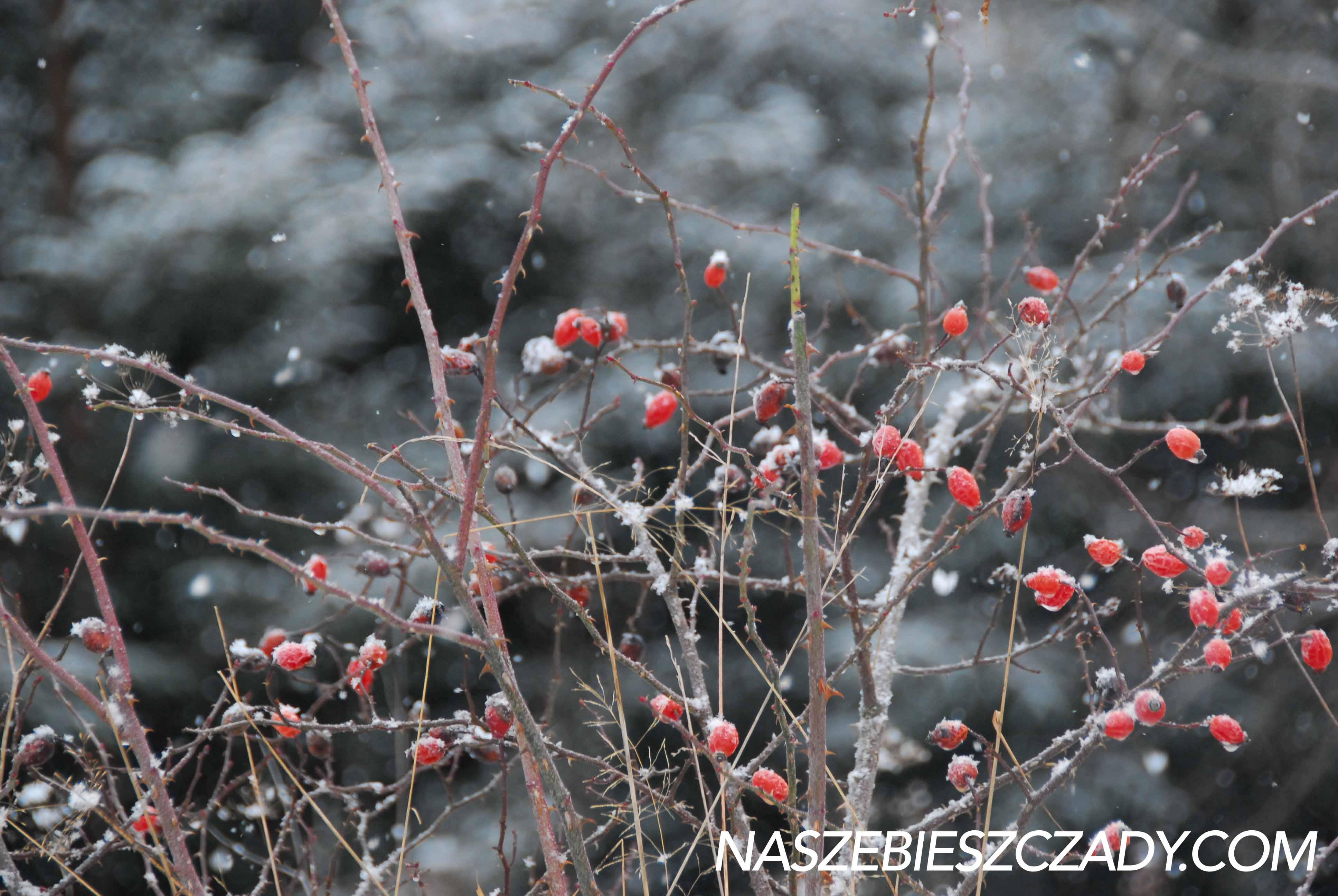 Gdzie jechac w Bieszczady zima